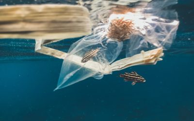 Why Plastic Bags Are Bad for the Environment & Should Be Banned
