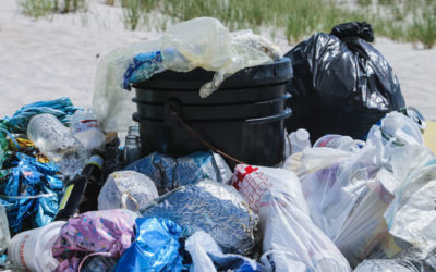 Plastic Bag Facts: Stats About Pollution & Recycling