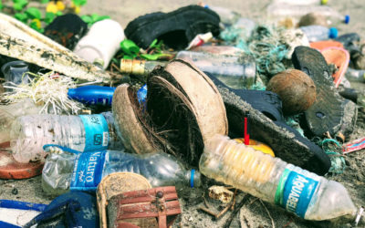How Many Plastic Bottles Are Recycled? (Plus Other Facts)