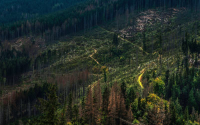 Why is Deforestation Bad? Top Consequences of Deforestation