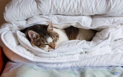 9 Best Organic Comforters & Duvets Reviewed [2021]